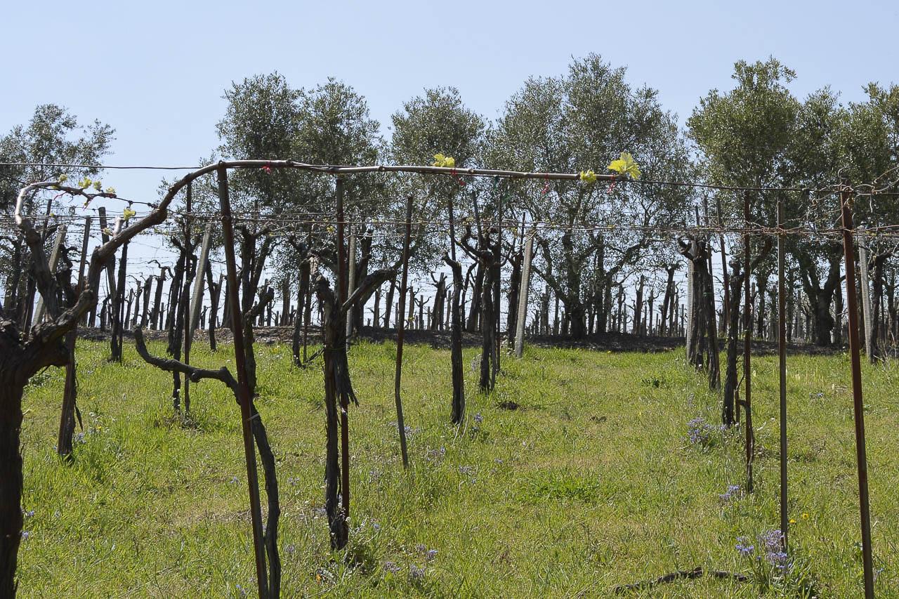 Azienda agricola Torrevenere - 22