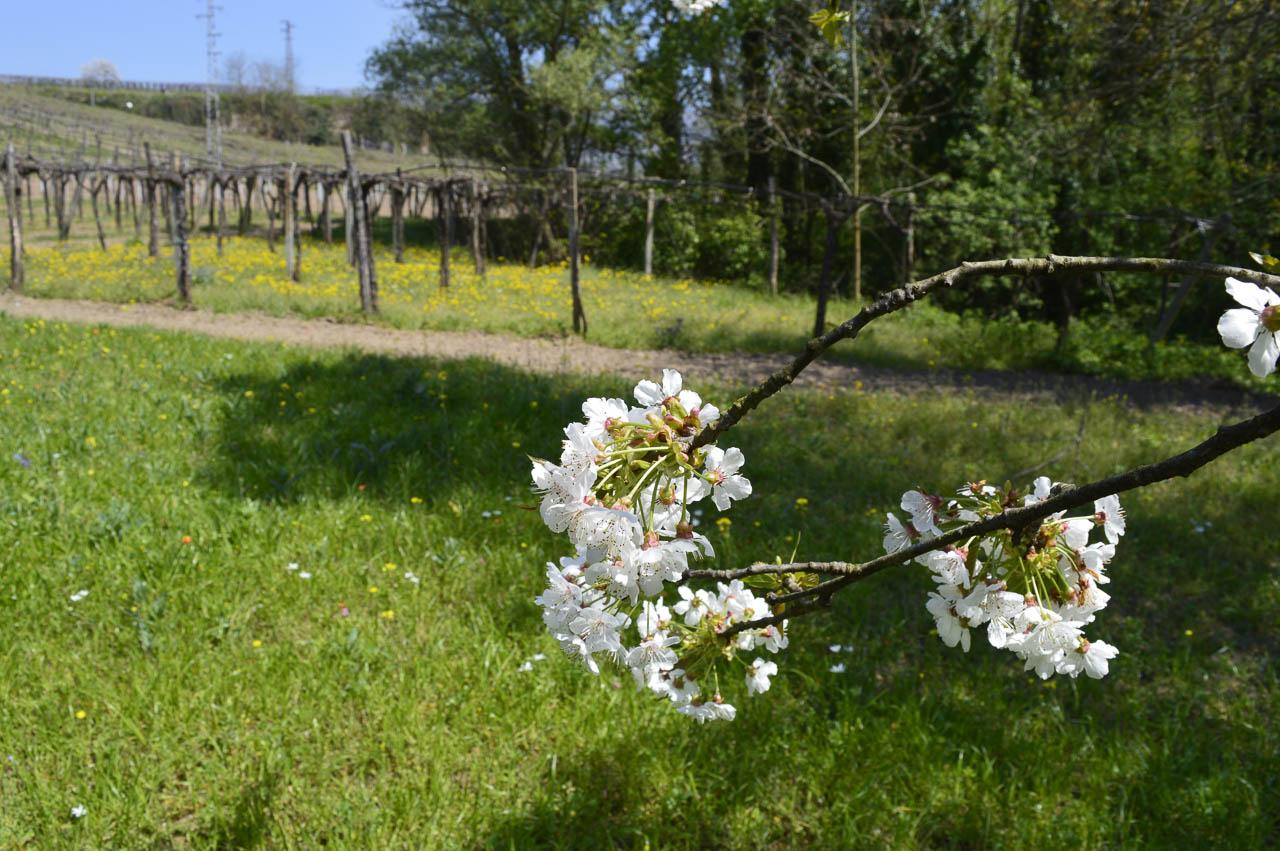 Azienda agricola Torrevenere -28
